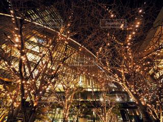 建物,冬,夜,ビル,ライト,樹木,イルミネーション,都会,明かり,明るい,LED,グランフロント,景観,電飾,ショッピングモール