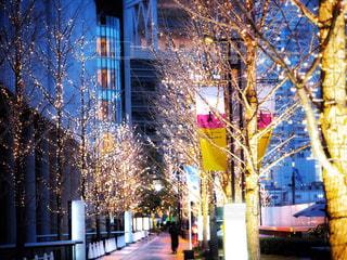 大阪,綺麗,樹木,イルミネーション,都会,ライトアップ,梅田,明るい,グランフロント,電飾,グランフロント大阪