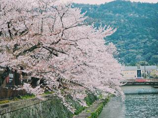 自然,風景,花,春,桜,橋,川,水面,山,景色,桜の花,さくら