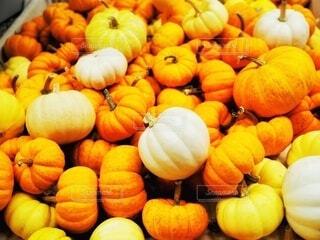 食べ物,秋,野菜,食品,食材,フレッシュ,ベジタブル,ハロウィーン,カボチャ,自然食品,セイヨウカボチャ