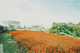 お花畑の写真・画像素材[4749065]