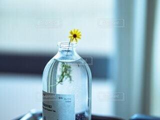 透明な瓶で一輪挿しの写真・画像素材[4768935]