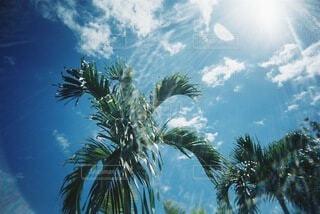 ヤシの実と空と太陽の光の写真・画像素材[4768953]