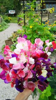 花,庭,屋外,ピンク,花束,オシャレ,イギリス,ナチュラル,フラワーアレンジ,スイートピー