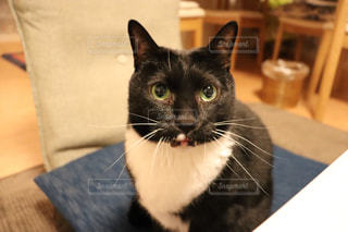 座椅子に座る黒猫🐈の写真・画像素材[2292877]