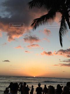 ヤシの木とビーチで凧の飛行の人々 のグループの写真・画像素材[986176]