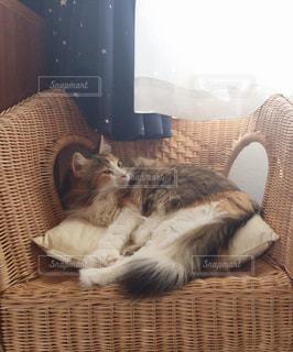 椅子に座って猫の写真・画像素材[976653]