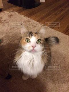 床に座って猫の写真・画像素材[977884]