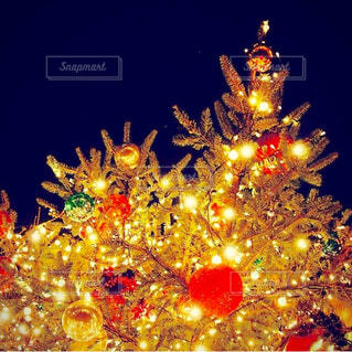 ライトアップされたクリスマス ツリーの写真・画像素材[934859]