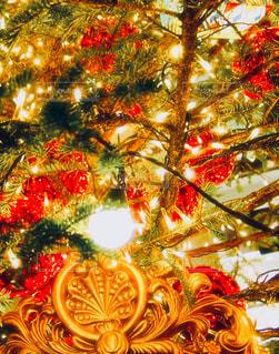 夜,屋外,カラフル,光,ライトアップ,キラキラ,クリスマス,思い出,煌めき,ツリーの下