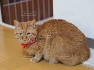 猫の写真・画像素材[30011]