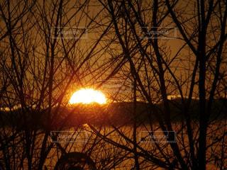 森に沈む夕日の写真・画像素材[977415]