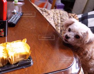 テーブルの上に座っている犬の写真・画像素材[977490]