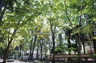 参道で森林浴の写真・画像素材[979398]