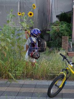 花,自転車,屋外,休日,おでかけ,観賞