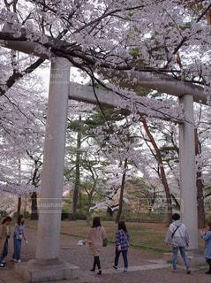 桜,鳥居,埼玉,大宮公園
