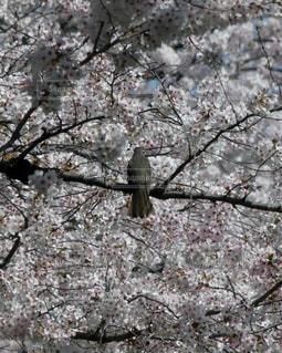 花に囲まれて小休止の写真・画像素材[1140976]