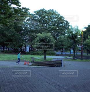 公園にある木の写真・画像素材[1201084]