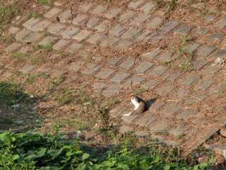 猫の日向ぼっこの写真・画像素材[1404234]