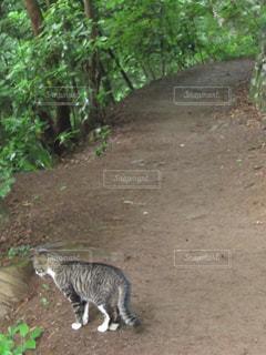 山を歩く猫の写真・画像素材[1404291]