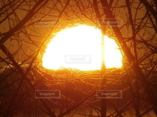 空,木,屋外,太陽,夕暮れ,光,明るい,ズーム