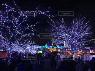 冬,きれい,イルミネーション,キラキラ,クリスマス