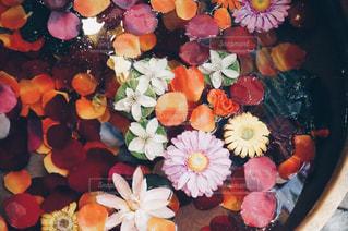 近くの花のアップの写真・画像素材[934834]