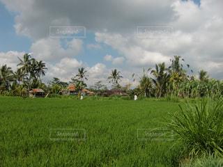 背景の木と大規模なグリーン フィールドの写真・画像素材[931355]