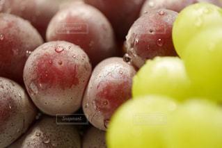 食べ物,秋,水滴,フルーツ,果物,甘い,ブドウ,葡萄,雫,美味しい,農作物,マスカット,フレッシュ,ぶどう,秋の味覚,食欲の秋,しずる感