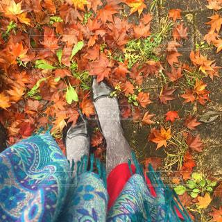 秋の地面の写真・画像素材[1082138]