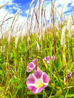 近くの花のアップ - No.1160052