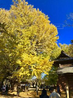 秋,紅葉,光,落ち葉,銀杏,日本,和,茨城,ビビット,スポット,輝く,フォトジェニック,西蓮寺