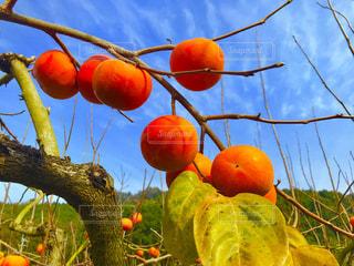 秋の味覚を堪能の写真・画像素材[1771855]