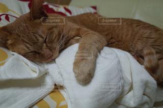 猫の写真・画像素材[239595]