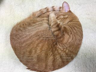 猫の写真・画像素材[239596]