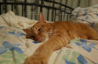 猫の写真・画像素材[239600]