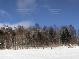 雪に覆われた木の写真・画像素材[941462]