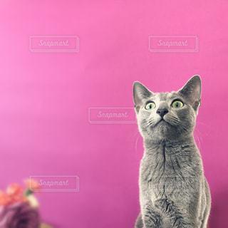 愛猫の写真・画像素材[1005386]