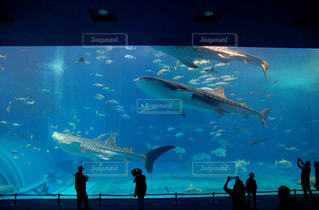沖縄美ら海水族館の写真・画像素材[934160]