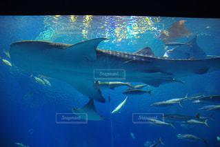 美ら海水族館の写真・画像素材[934189]
