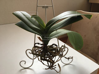 近くの植物のアップの写真・画像素材[969217]