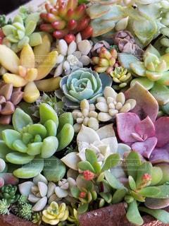 緑,植物,水,フラワー,寄せ植え,多肉植物,多肉,キュン,ぷにぷに,酸素