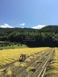 草の上に乗って男カバー フィールドの写真・画像素材[1409487]