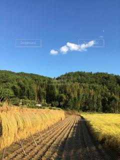 緑豊かな緑のフィールドに大きな長い列車の写真・画像素材[1409493]