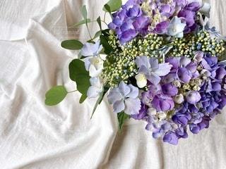 庭の紫陽花とユーカリの写真・画像素材[3377852]