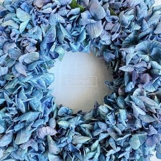 ドライにした紫陽花の写真・画像素材[4694101]