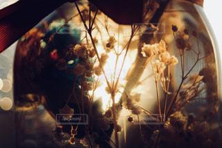 花,夕日,かすみ草,太陽,植物,夕方,日差し,光,逆光,ハーバリウム
