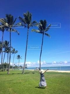 ハワイでヤシの木と♡の写真・画像素材[4096682]
