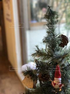 冬,木,室内,クリスマス,サンタ,暖かさ