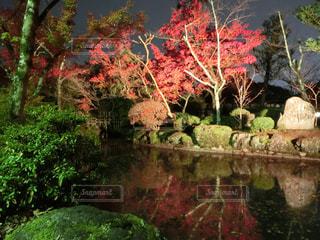 近くに池のアップの写真・画像素材[1665730]